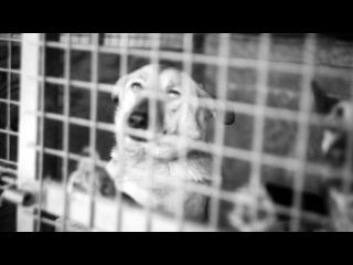 kisakotik видео